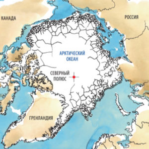 арктика, белые медведи
