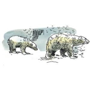 белый медведь, викторина