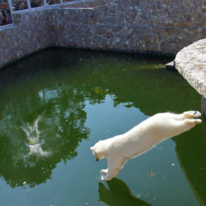 санкт-петербург, зоопарк, белый медведь